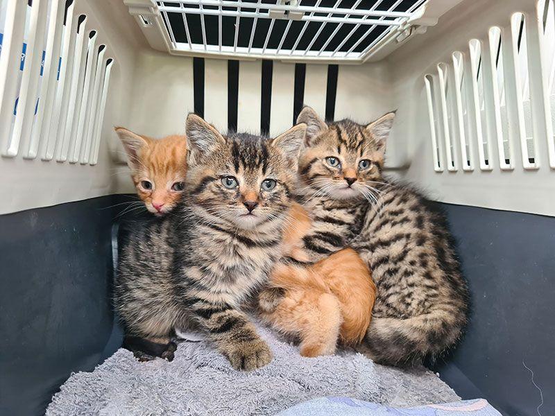 Katzen verschenken schweiz zu junge Katze Kaufen